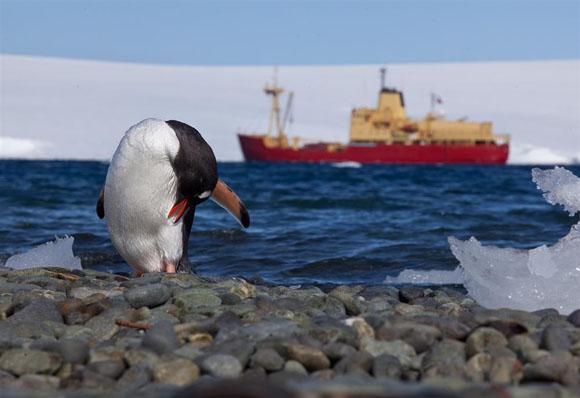 Mission Antarctic- Szenenbild 2
